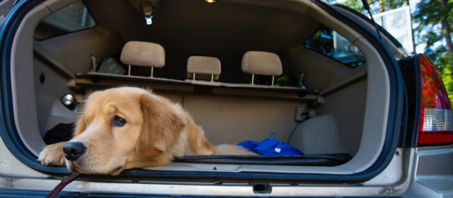 Dogs in hot cars? What to do..